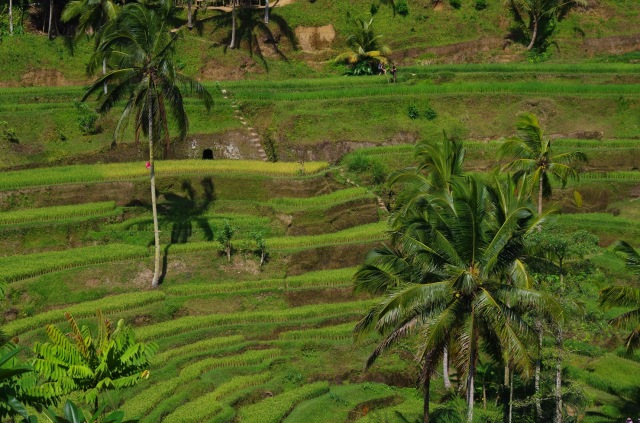 rizsterasz 5