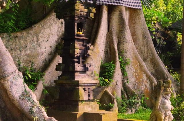 banyan tree törzse