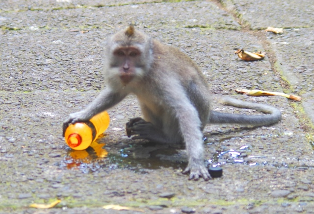 lopós majom