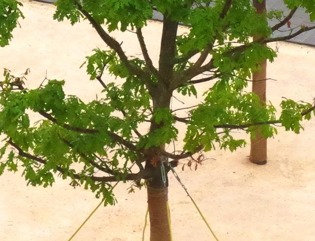 rab fák