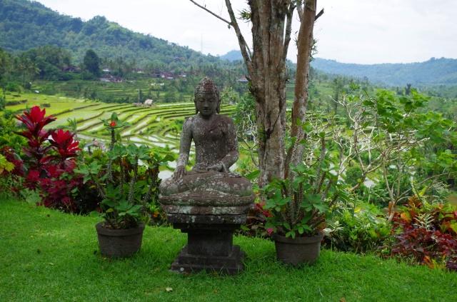 Buddha és rizsterasz