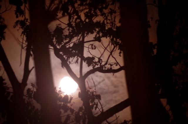éjjeli erdő