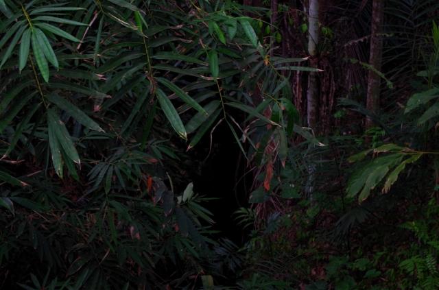 sűrű sötét erdő
