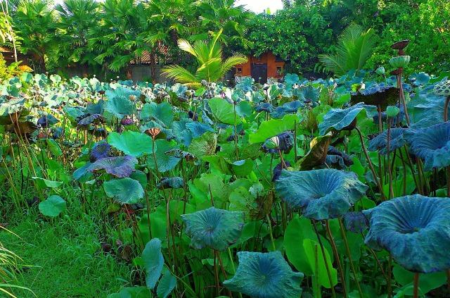 zöld liliomok