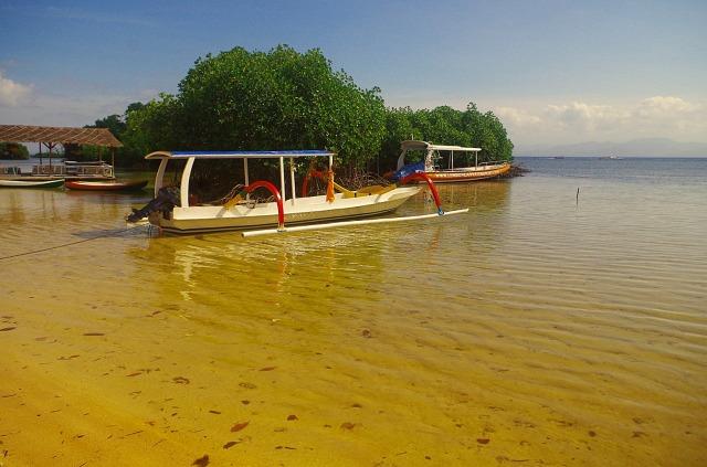 mangrove fák sárga tengerrel