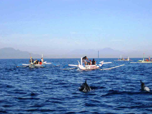 Lovina-Beach dolphin